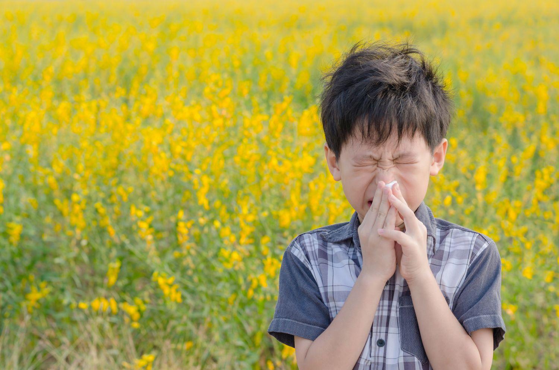 Ein Junge niest im Rapsfeld. Er leidet an einer Pollenallergie.