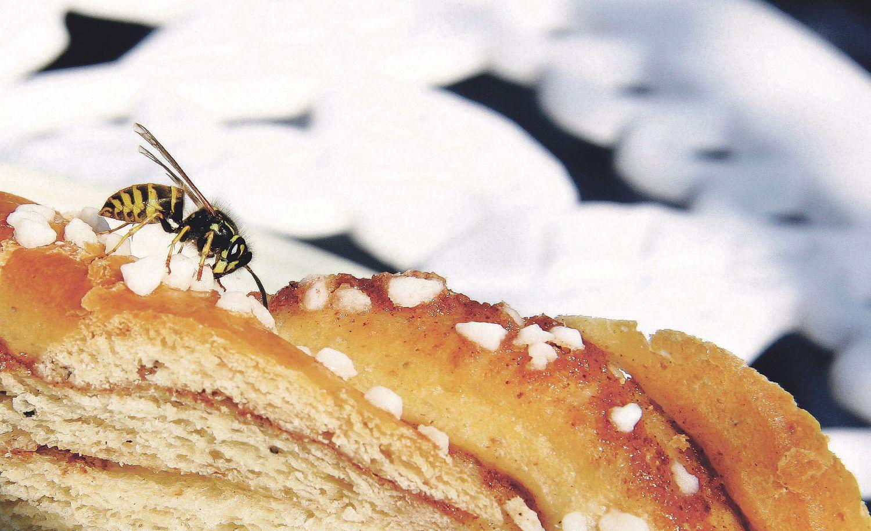 Eine Wespe sitzt auf einem Gebäckstück. Thema: Juckreiz durch Insektenstiche